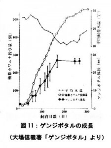ゲンジボタルの成長