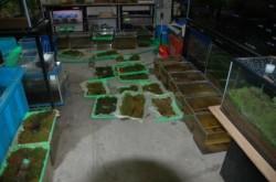 飼育室内苔のトレイが並んでいるところ-r